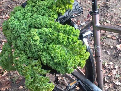 HBW boerenkool op fiets