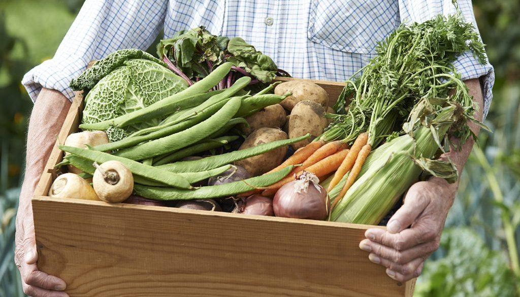 Foto groenten kist klein